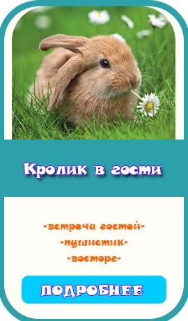 кролик на день рождения